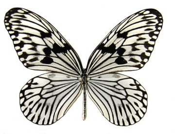 84771345_large_068ideaidearicepaperbutterfly